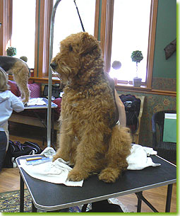 ATCC Grooming Seminar 2007 - Maybe if I sit here like the perfect gentleman somebody will notice me.