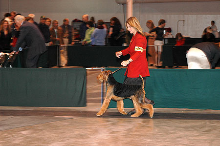 #267 Junior Puppy Dog-Tanyetta Paradym Scotch N Soda, 'Gus' bred/owned by John Ross and Kelly Wood