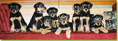 Skyecroft puppies, photo courtesy of Elaine Zemaitis